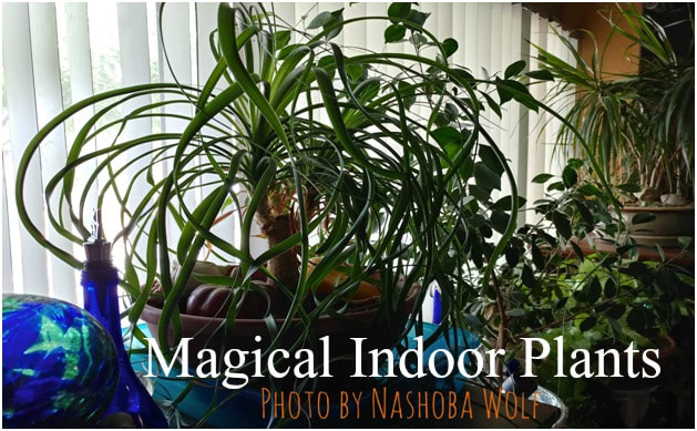 Magical Indoor Plants Inner Circle Sanctuary